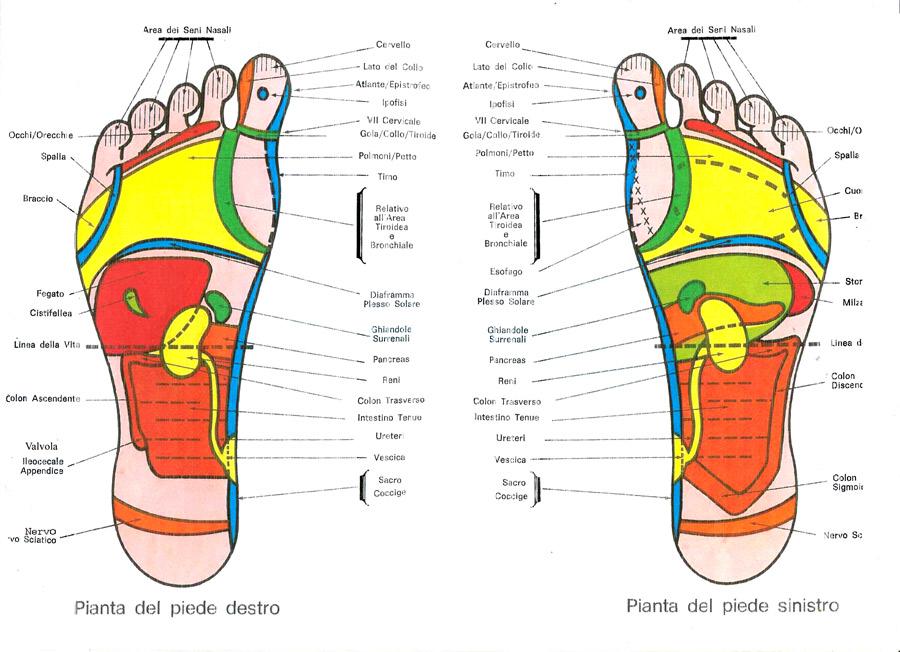 Popolare Riflessologia plantare Verona |Istituto Anthos SQ14